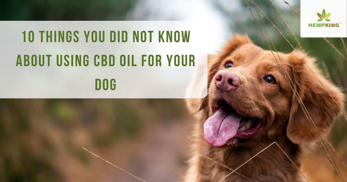10 things you did not know about using CBD oil for your dog