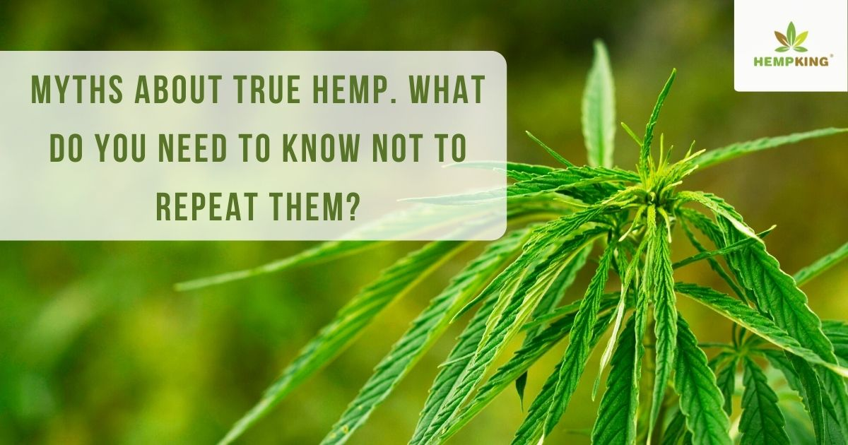 Myths about true hemp. What do you need to know not to repeat them?