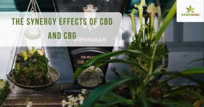 The synergy effects of CBD and CBG