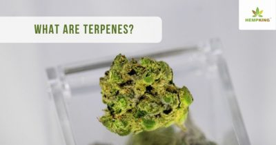 what are terpenes