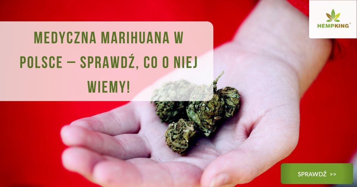 Medyczna marihuana w Polsce – sprawdź, co o niej wiemy!