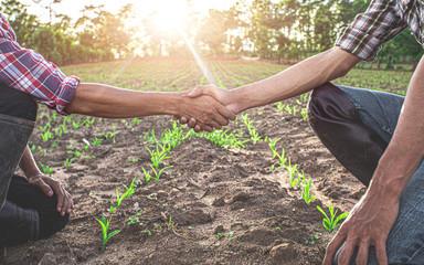 Rolnictwo współpraca
