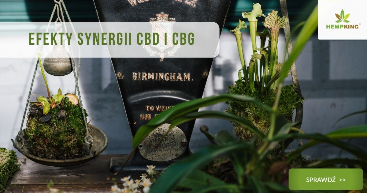 Efekty synergii CBD i CBG