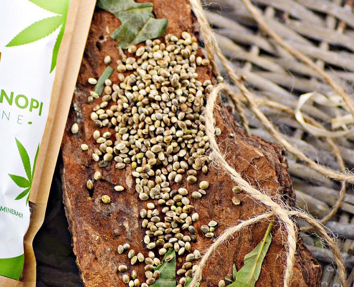 Ziarna konopne – orzechowo-słonecznikowy smak konopi