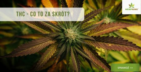 thc - co to za skrót?