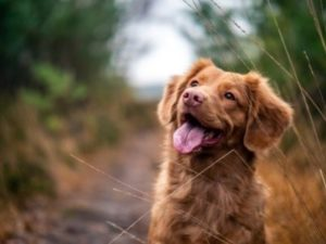 CBD dla zwierząt: 10 rzeczy, których nie wiedziałeś o zastosowaniu oleju CBD u Twojego psa